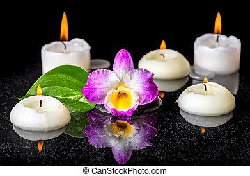 kamienie, dendrobium, pojęcie, liść, odbicie, purpurowy, świece, zen, rosa, czarnoskóry, woda, zdrój, closeup, zielony, storczyk