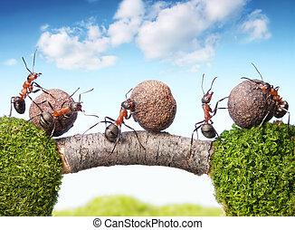 kamienie, mrówki, teamwork, drużyna, kołyszący, most