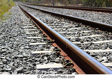 kamienie, na, szczegół, ciemny, zardzewiały, pociąg, żelazo...