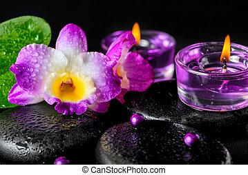 kamienie, pojęcie, kwiat, zen, bazalt, krople, zdrój, lila, storczyk
