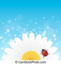 kamilla, virág, és, katicabogár, képben látható, kék, háttér.