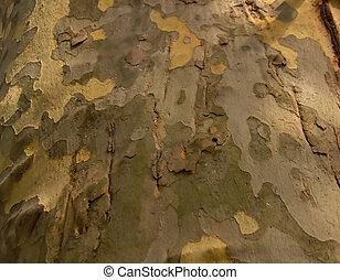 kamouflage, träd