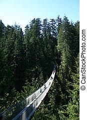 kanada, vancouver, zawieszenie most, capilano