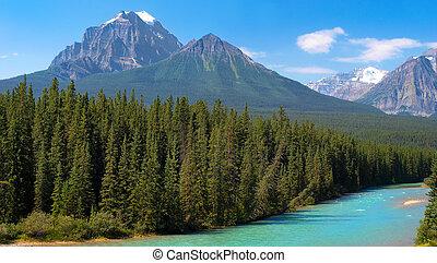kanadensare, vildmark, in, banff medborgare parkera,...