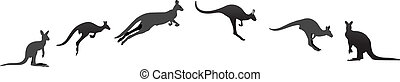 Kangaroo at different stages vector illustration