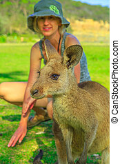 Kangaroo at Pebbly Beach - Front view of kangaroo on green ...