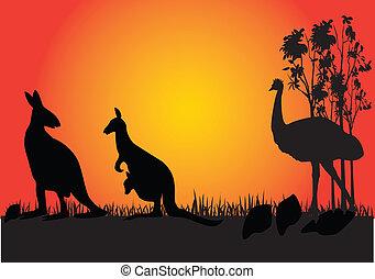 kangarooo, emu, ocaso