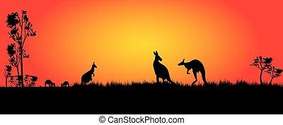 kangaroos feeding in the sunset