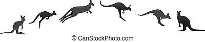kangoeroe, op, anders, stadia