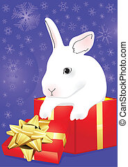 kanin, med, blå, giftbox