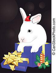 kanin, sittande, i rött, giftbox