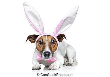 kaninchen, hund, ostern