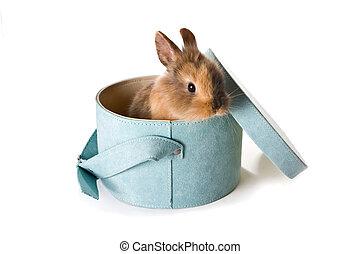 kaninchen, in, a, kasten