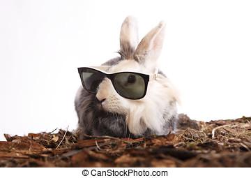 kaninchen, mit, sonnenbrille