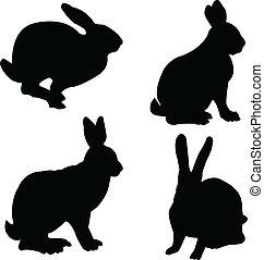 kaninchen, sammlung, -, vektor