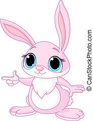 kaninchen, zeigen