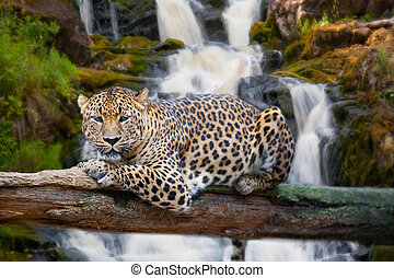 kap, jaguár, maradék, ellen, vízesés