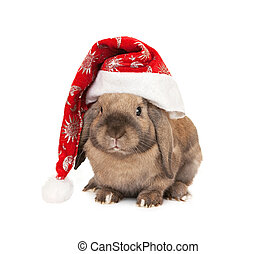 kapelusz, nowy rok, królik