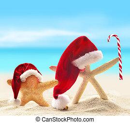 kapelusz, piaszczysta plaża, święty, rozgwiazda