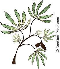 kapok, branche arbre