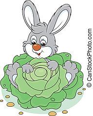 kappes, kaninchen