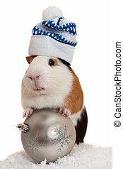 karácsony, guinea disznó