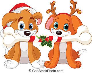 karácsony, két, kutyák