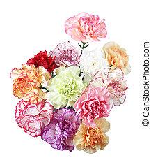 karafiát, květiny