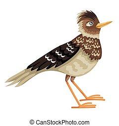 karakter, vrijstaand, zijn, feathered, leeuwerik, vector,...