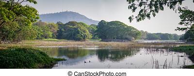 Karanji lake bird sanctuary, Mysore, India - Karanji lake ...
