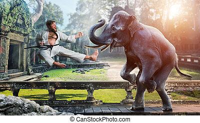 karateka, verekszik, noha, elefánt