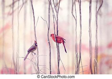 kardinaal, noordelijk, vogels