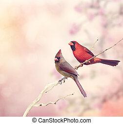 kardinalen, twee, noordelijk