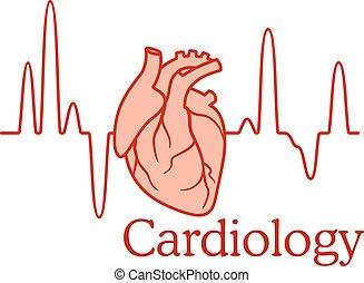 kardiologia, pojęcie, z, na, ecg, i, serce