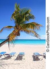 karibisch, kokospalme, bäume, in, tuquoise, meer