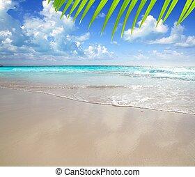 karibisch, morgen, licht, sandstrand, nasser sand, reflexion