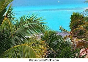 karibisch, türkisfarbene see, kokospalme, bäume