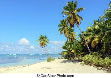 karibisch, wild, sandstrand, punta, cana