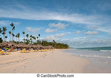 karibisk, kokosnød håndflade, træer