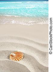 karibisk, pärla, på, skal, vita sandpappra, strand, tropisk