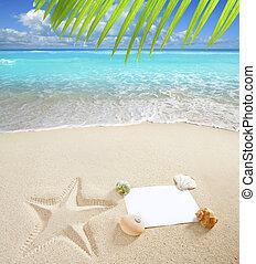 karibisk, sjöstjärna, skalen, utrymme, hav, tom, avskrift, strand