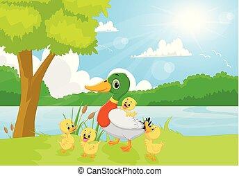 karikatúra, kacsa család, képben látható, a, folyópart