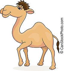 karikatur, kamel