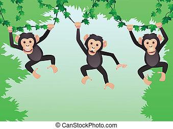 karikatur, schimpanse