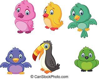 karikatur, vögel, sammlung, satz
