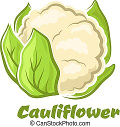 karikatura, květák, rostlina, s, mladický list