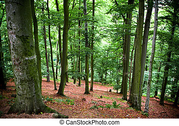 Karlovy Vary surroundings. Forest
