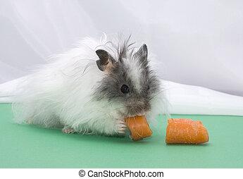 karotte, hamster