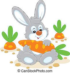 karotte, kaninchen