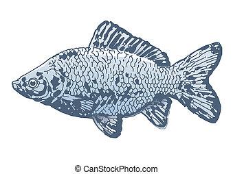 Alle Arten von Fisch datieren